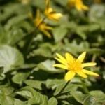 Flower Awakening_sm