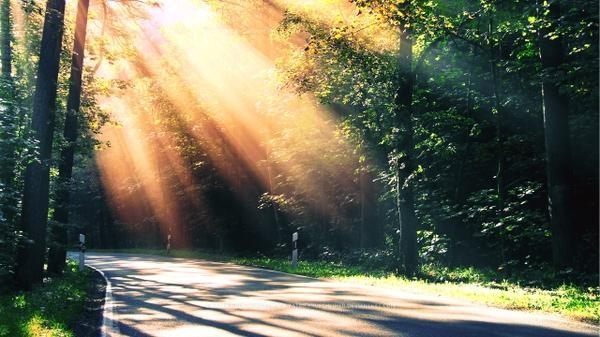 102608_trees-deviantart-sunlight-roads-morning-2560x1440-wallpaper_wallpaperswa.com_67