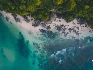 Paradise Birds-Eye-View